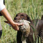 Jachthonden en hun specialiteit tijdens het jagen