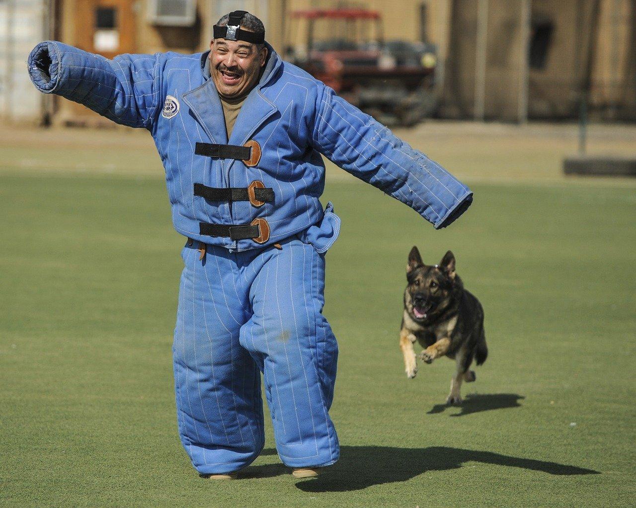 Duitse herder hond pakwerk