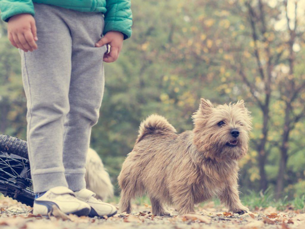 Norfolk en Norwich Terrier