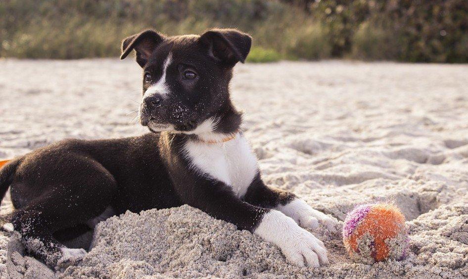 onstuimigheid-en-energie-bij-een-pup