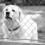 Waarom een hond adopteren