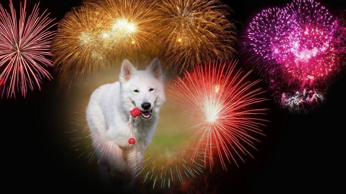 hond-en-vuurwerk