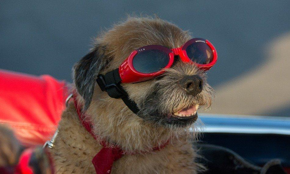hond-op-vakantie