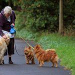 10 punten waar honden bijdragen tot een gezonder leven