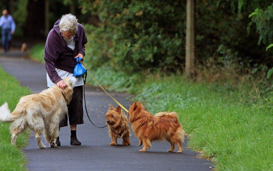 honden-beter-leven