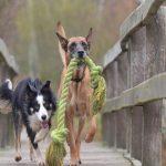 Geschikt hondenspeelgoed