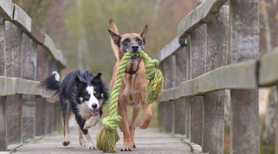 hondenspeelgoed - honden-spelen-met-koorde