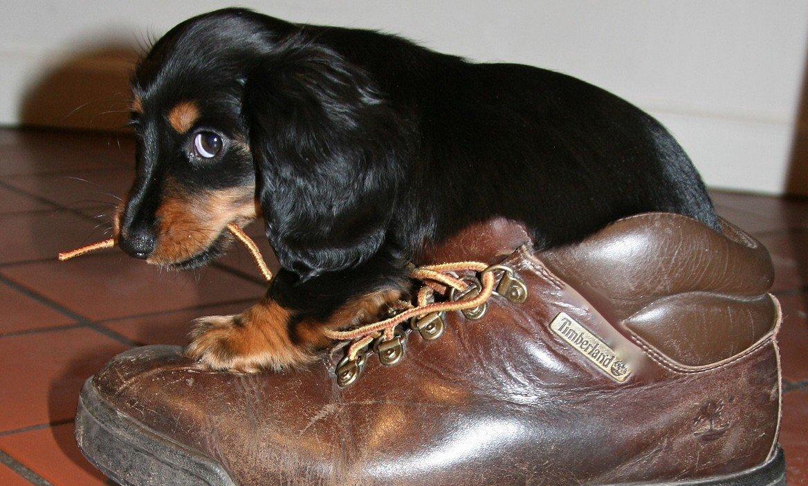 kauwmanieren-puppy