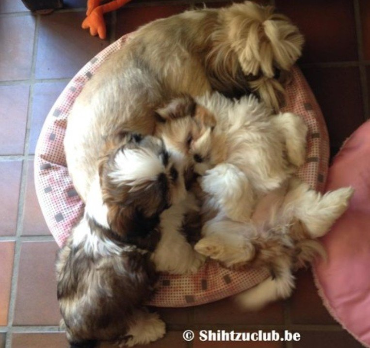 mamma-met-puppy