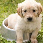 De huid , pijn , ontlasting , eten en drinken bij puppies