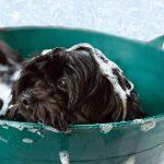 Verzorging van vacht, gebit en oren van je hond