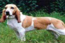 schweizer-laufhunde