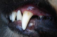 tanden-van-hond