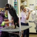 Vachtverzorging en soorten vachten bij honden