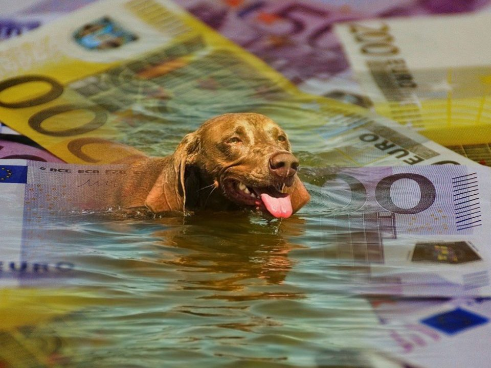 wat-kost-een-hond