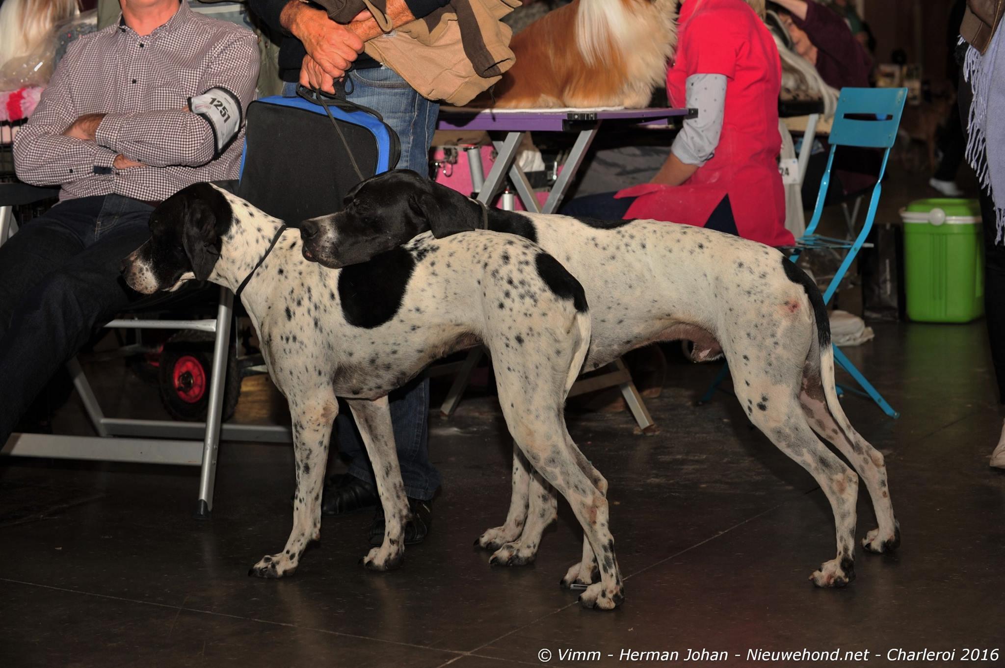 dogshow-2-honden