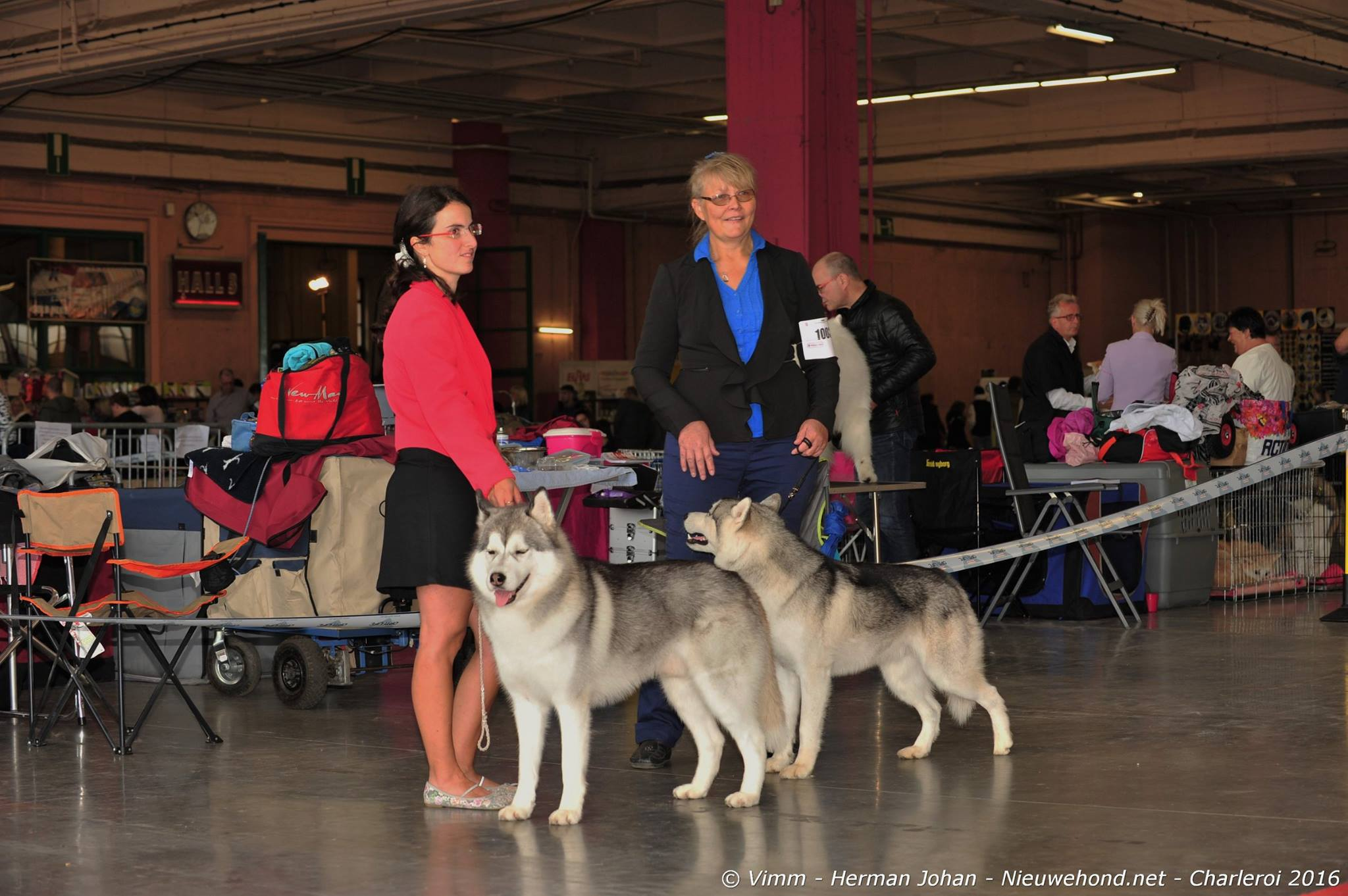 dogshow-hond