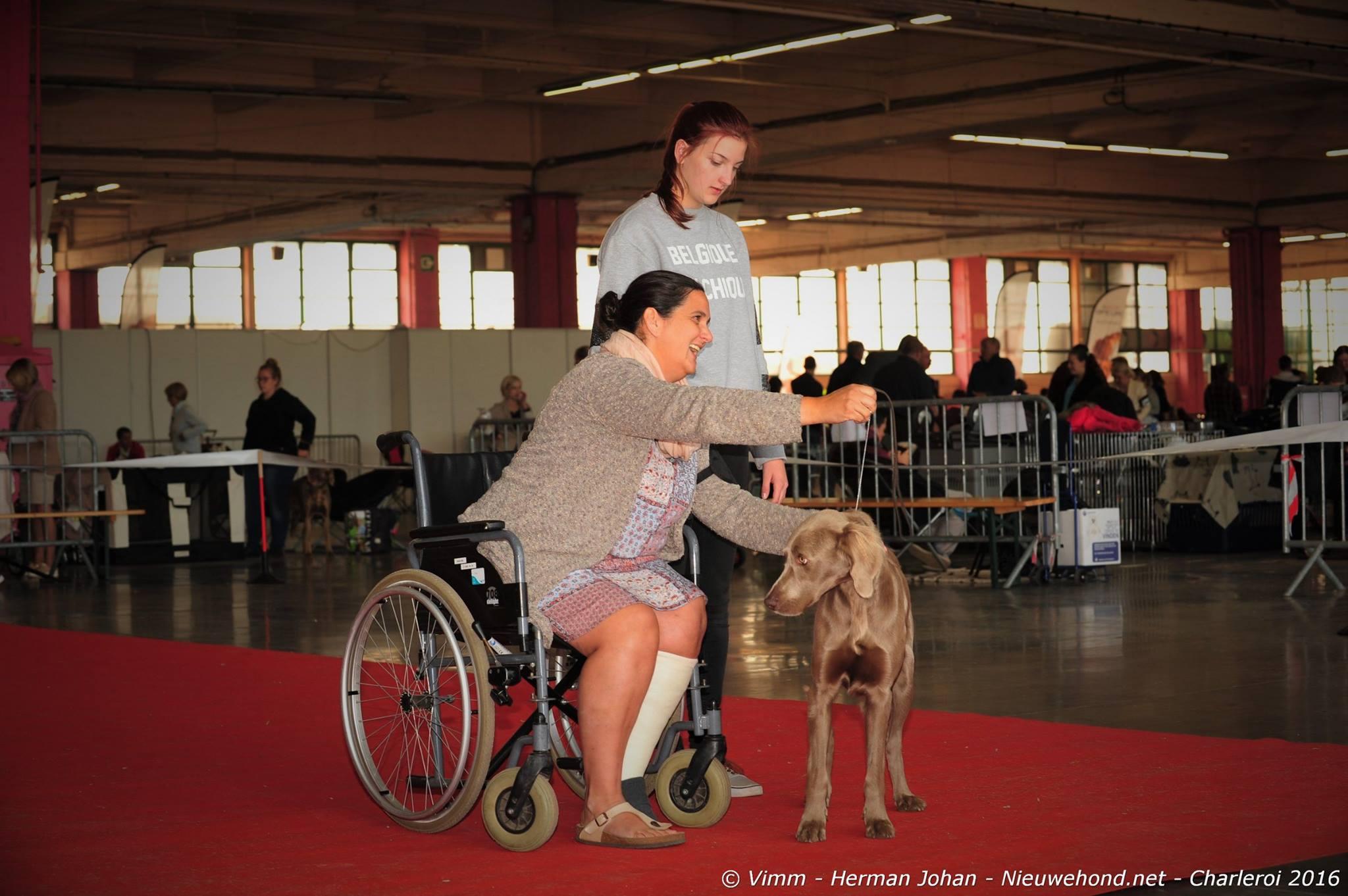 dogshow-nieuwe-hond