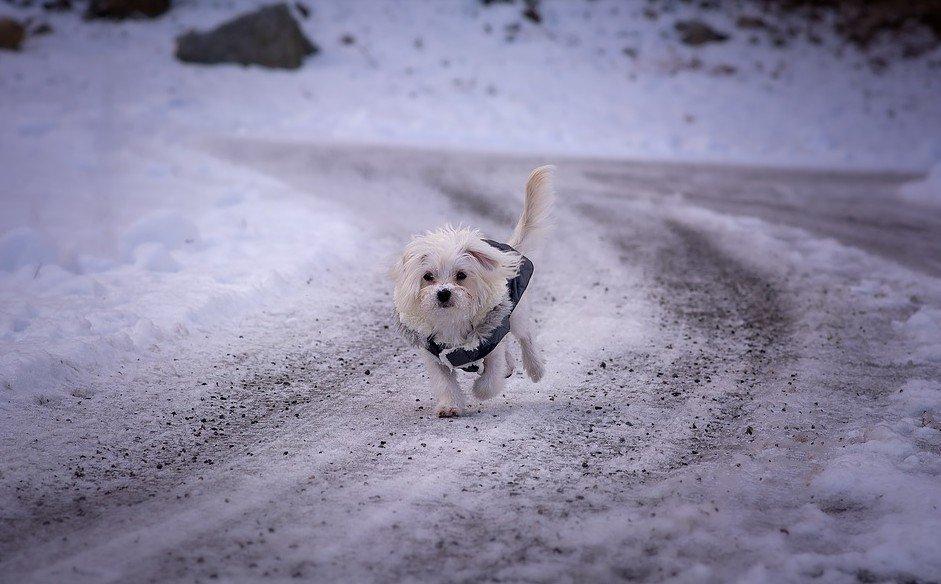 gestrooide-wegen-zijn-een-gevaar-voor-de-hond