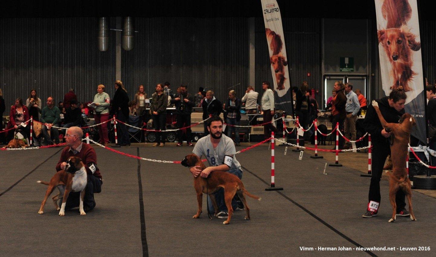 Sfeerfoto's Hondenshow Leuven 2016
