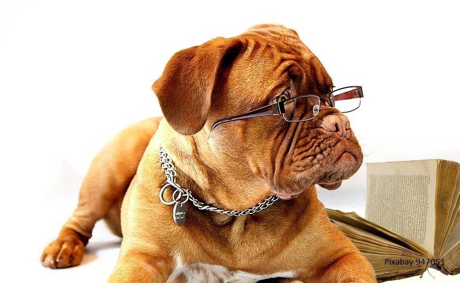 Belangrijke tips bij het kiezen van een nieuwe hond
