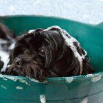 Mijn hond stinkt en wat zijn de oorzaken