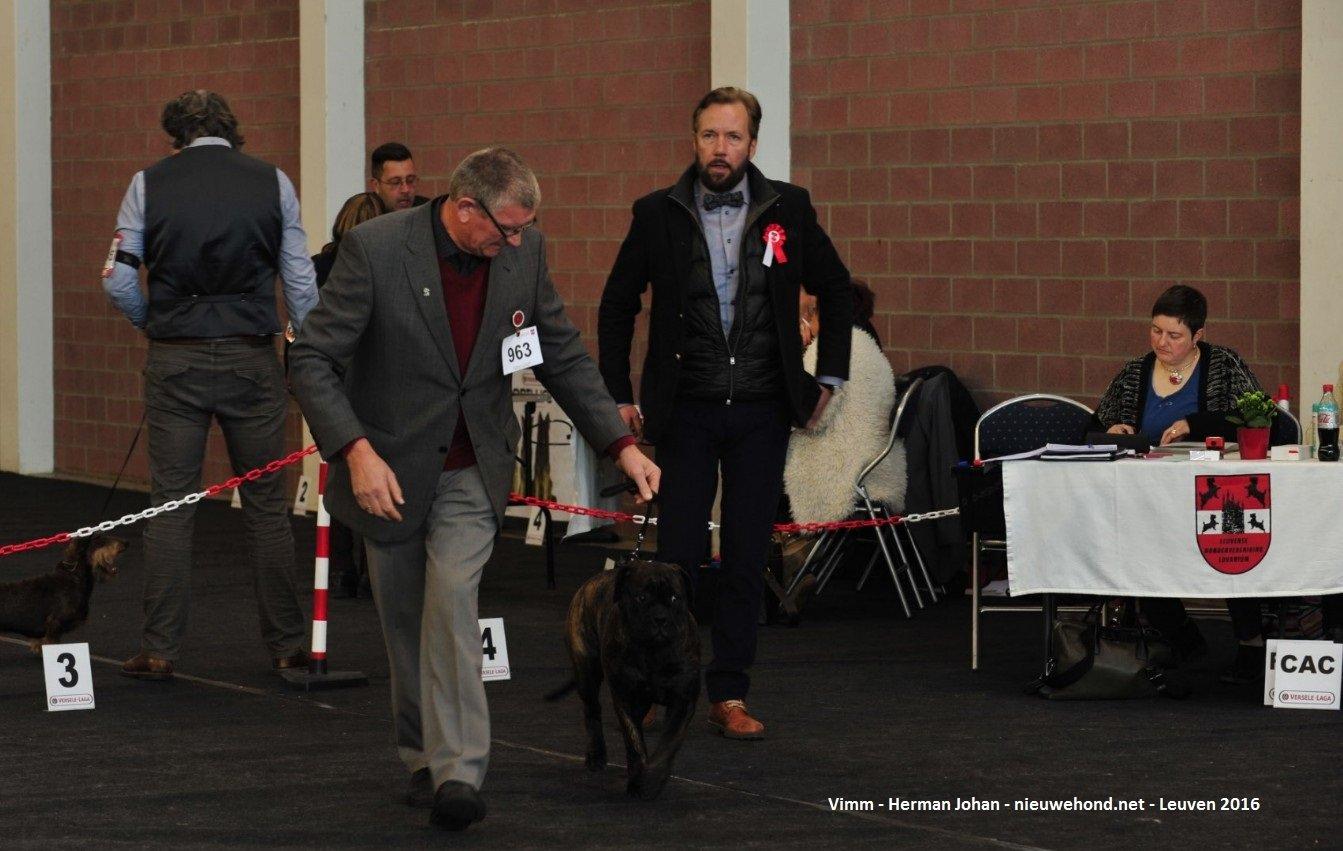 De nieuwe hond - Sfeerfoto's Hondenshow Leuven 2016