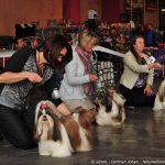 Fotoverslag Hondenshow Charleroi 2016