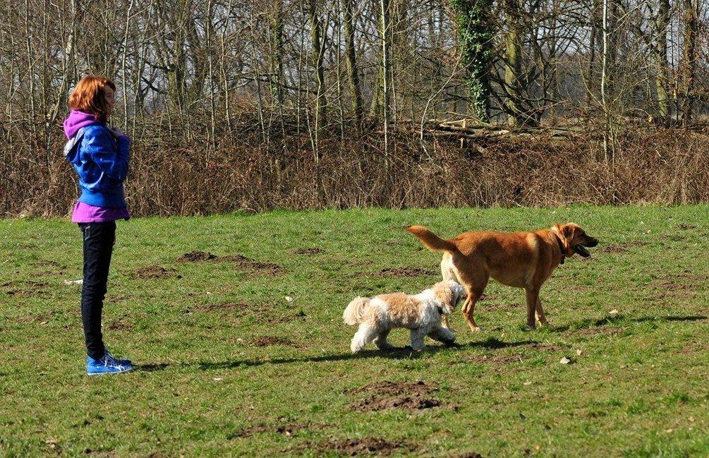 wandelen-met-puppie