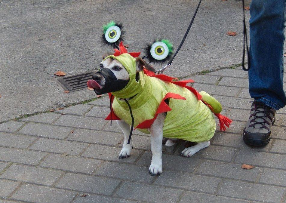 Halloween woef wandeling Ronse - woef company halloween 1