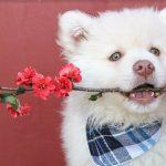 Bloemen en planten giftig voor honden