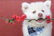 giftige bloemen en planten voor honden