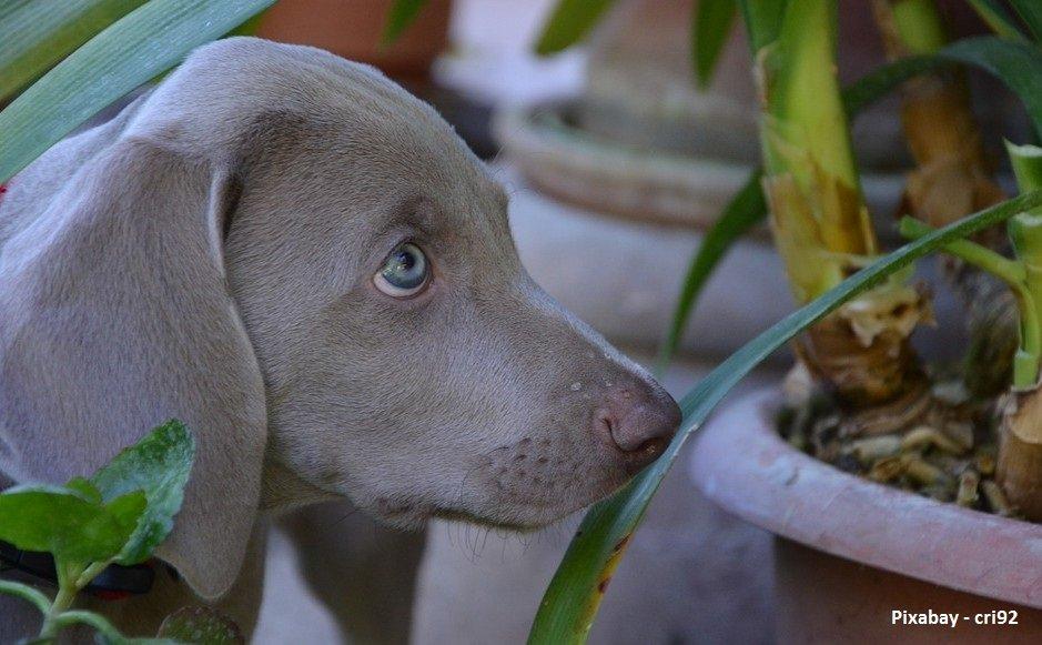 welke planten zijn giftig voor honden