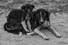 puppy-en-mama