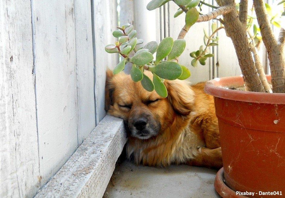 vergiftiging-bij-honden