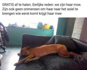 Hond beu gratis af te halen