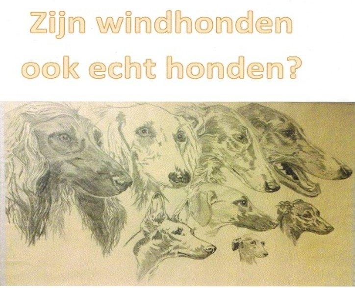 zijn windhonden echte honden