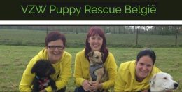 puppy rescue belgie