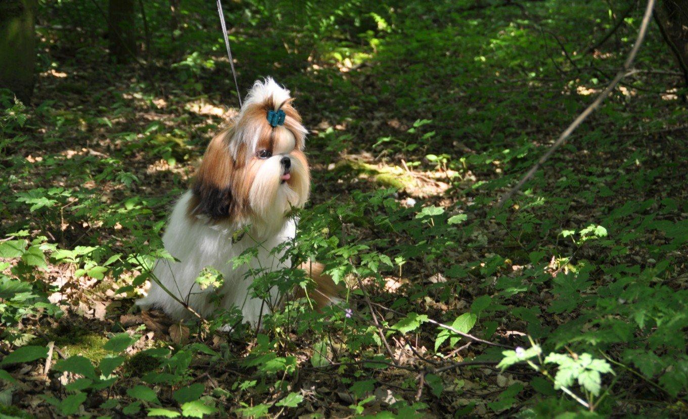 Honden in de natuur - Foto Mysticwonderland