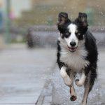 CaniCross is werken aan je conditie en die van je hond