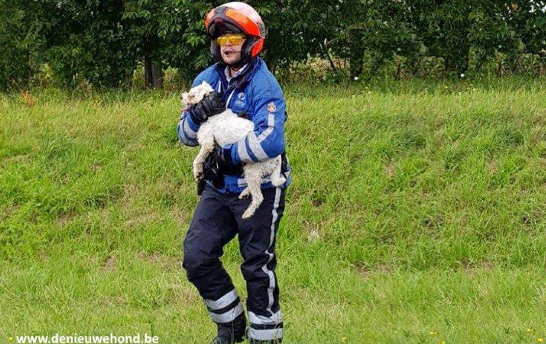 politie redt hondje