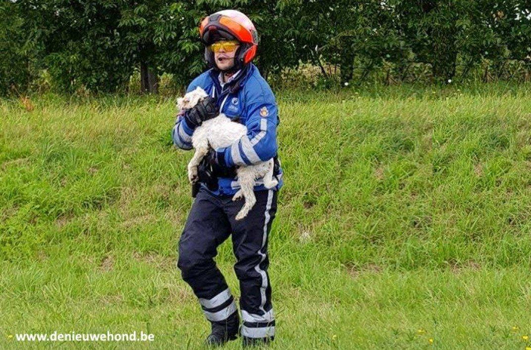 politie red hondje