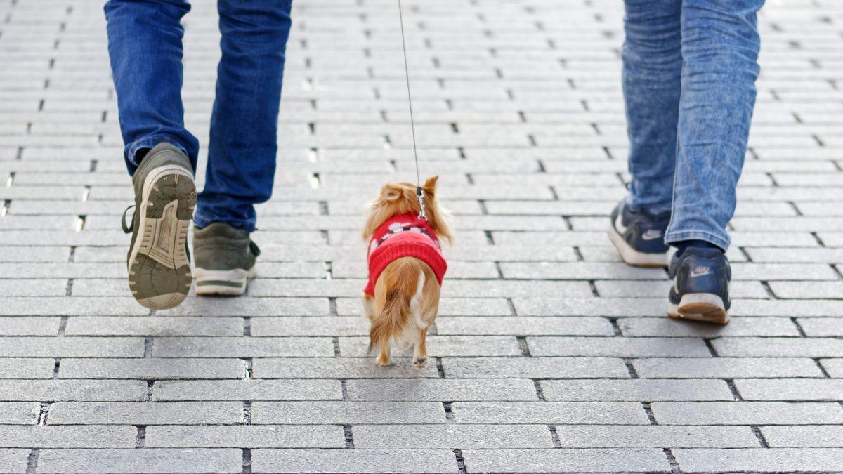 Een hond delen is perfect mogelijk