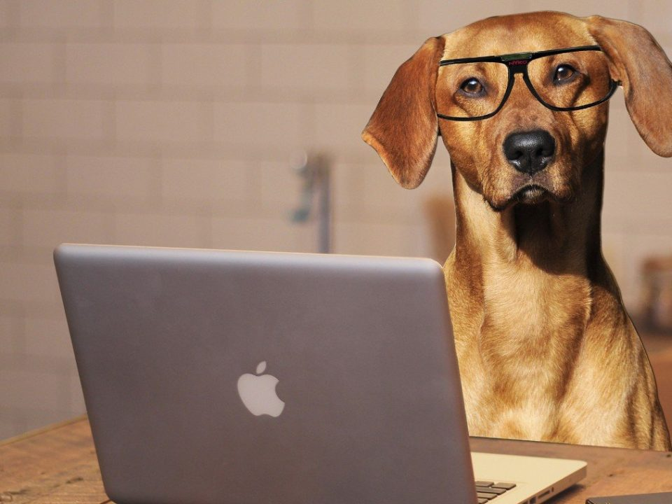 Hoe slim is mijn hond doe de iq-test