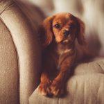 Je hond mag in de zetel, hoe deze netjes houden ?