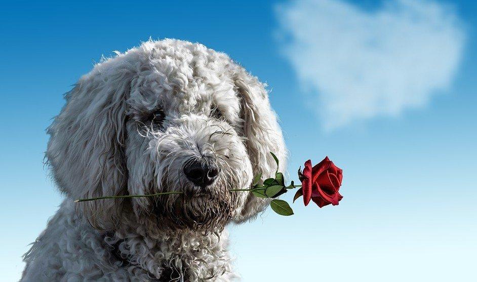 honden hebben gevoelens net als mensen