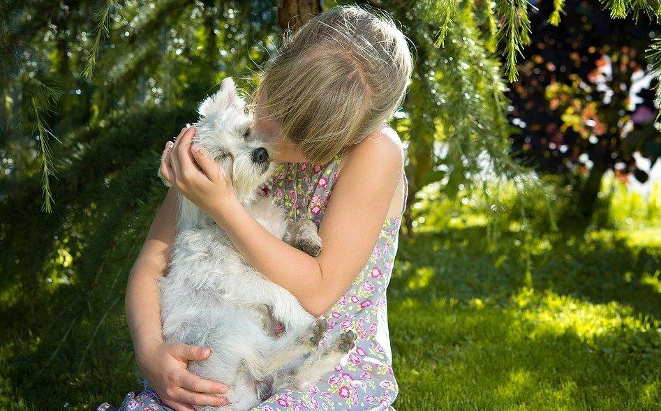 honden hebben ook gevoelens net als mensen