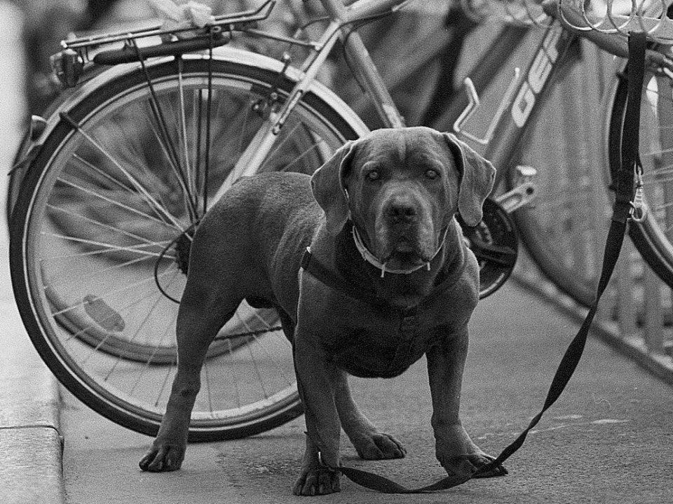 honden niet toegelaten