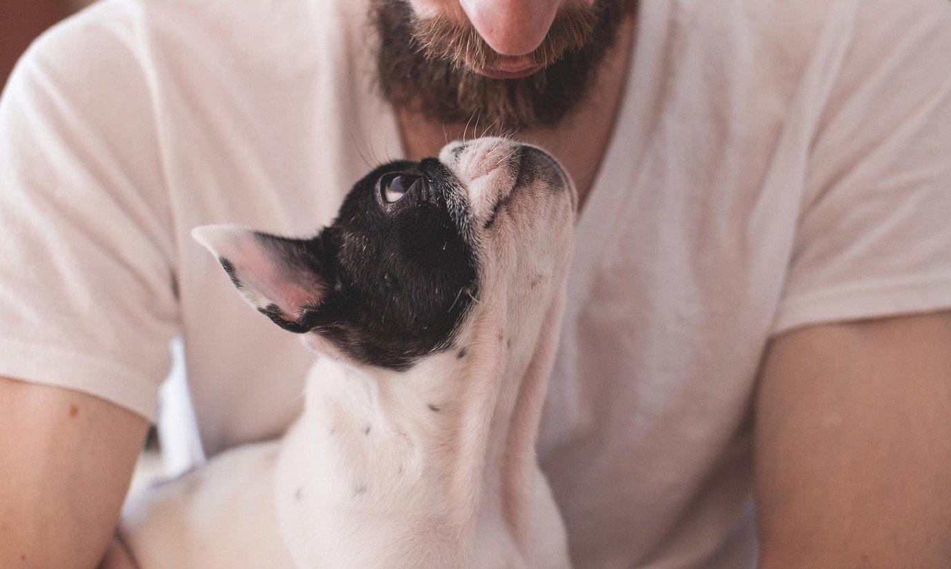kunnen honden liefhebben foto pixabay