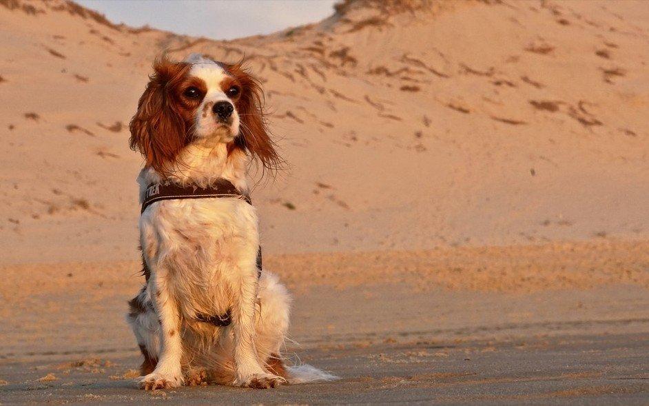 Met je hond op vakantie - zandvlieg